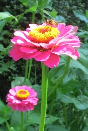 Thumbelina Supersized Pink