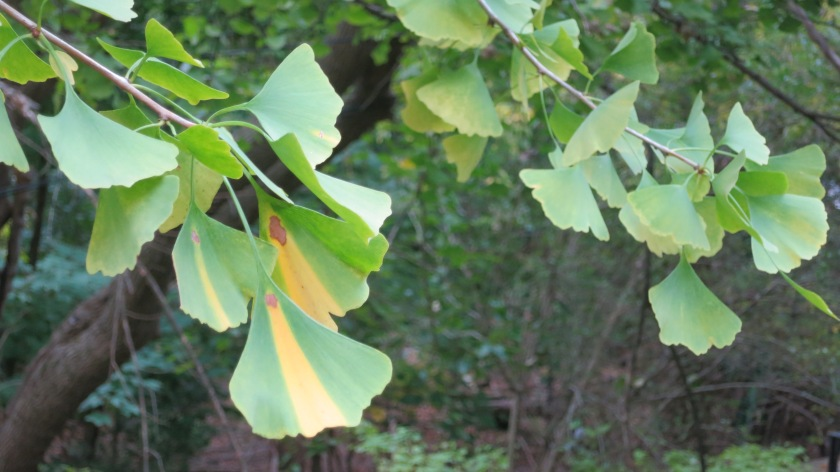 Misfortune of knowing Blog Gingko