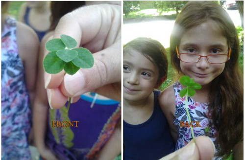 six-leaf-clover-august-2016-2